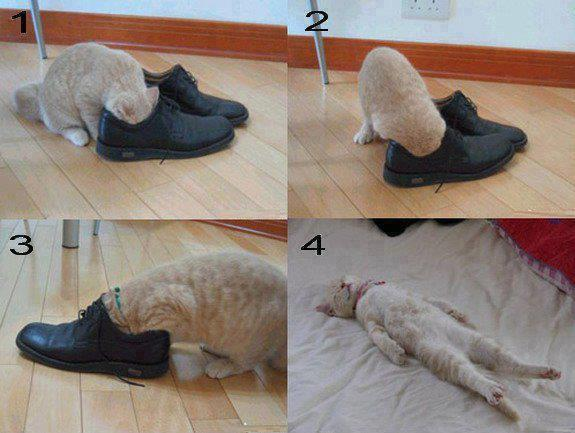 funny picture of a cat in smelly shoes
